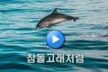4월 콘텐츠 시청하기 ([三魅鏡] 참돌고래처럼 & [대륙을 말하다] 350년 가위 한길, 장샤오촨)